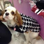 Hahnentritt Pulli für Hunde Weiß und Schwarz
