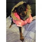 Pink Steppjacke für Hunde