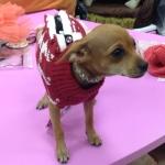 Maglione per cani pied-de-poule Bianco e Rosso