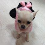 Cappottino Rosa per cani con Gonna Nera