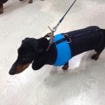 Hellblau und Schwarz ärmellose Hund Jacke