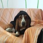 Schwarze Sweatshirts für Große Hunde
