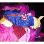 Cappotto Cani Piccoli senza Cappuccio in Azzurro