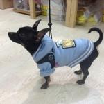 Felpa Celeste per Cani con Cappuccio e Pon Pon