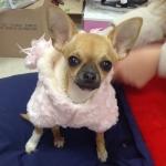 Cappotto con Pelliccia per Cani in colore Rosa Chiaro
