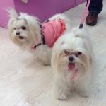 Rosa Gepolsterten Hundemantel mit Tupfen