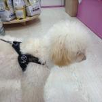 Arnés Verde Camuflaje para Perro ajustable Bajo el Vientre