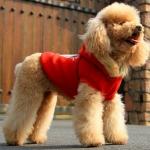 Sweatshirt für Hunde mit Kapuze mit Kunstfell in Rot