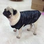 Schwarze Jacke mit Öffnung auf der Rückseite für kleine Hunde