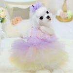 Fee Kostüm für Kleine Hunde