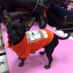 Sweatshirt für Hunde ohne Kapuze in Orange