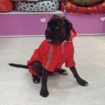 Roten Regenjacke 4 Pfoten für große Hunde