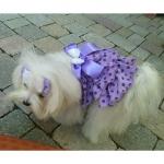 Sommerkleid für Hunde mit Tupfen in Lavender