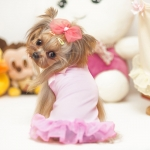 Rosa Sonnenkleid für Hund mit Bogen