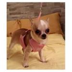 Sommer Softgeschirr für Hunde mit Leine in Rosa
