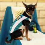 Argentinien Fußball T-Shirt für Hunde