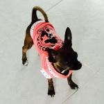 Felpa leggera Princess Rosa Pastello per Cani Piccoli