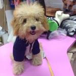 Grau und Blau Hund Pullover mit Reißverschluss