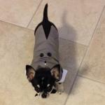 Frac Grigio per Cani di taglia piccola