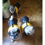 Gelb Windjacke für Hunde