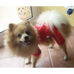 Roten Regenjacke FBI 4 Pfoten für kleine Hunde