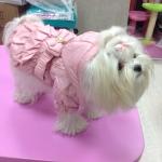 Rosa Winterjacke Herzogin für Hund