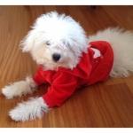 Roten Sweatshirt für Hunde mit Weihnachtsmann