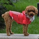 Mantel für kleine Hunde in Rot mit Kapuzen