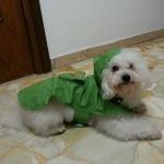 Billige Regenmantel für kleine Hunde in Grün