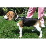 Einstellbar Geschirr für kleine Hunde - Fuchsia Fluo