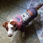 Sweatshirt New York mit Kapuze für kleinen Hund in Blau