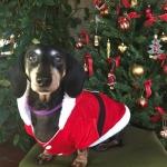 Santa Anzug für Hunde
