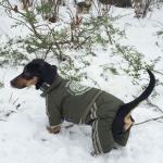 Winteranzug 4 Pfoten für Hunde ohne Kapuze in Grün