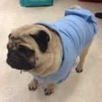 Hellblau Hoodie für Große Hunde
