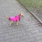 Fleece für kleine Hunde im Lebhaft Rosa