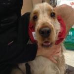 Wasserdicht Ohrenschutz für Hunde in Rot