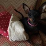 Kunstleder Rosa Halsband für Kleine Hunde mit Strass