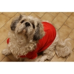 Rot Parka für Hunde mit Rückentasche
