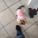 Rosa Hunde Sweatshirt
