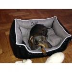Glatte Abnehmbarer Hundebett in Schwarz und Grau