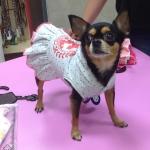 Sommerkleid Sweet Girl für kleine Hunde in Grau