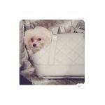 Deluxe Tasche für kleine Hunde Venus Silber