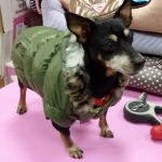 Bomberjacke für kleine Hunde mit Reißverschlussen in Grün