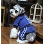 Winteranzug für Kleinen Hund Aviator Blau