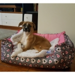 Hundebett abnehmbarer Bezug in Rosa mit Herzen