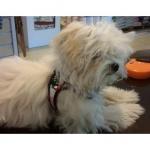 Brustgeschirr kleine Hunde mit Kordelzug in Rosa Tarnung