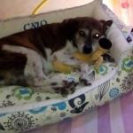 Rechteckiges und Herausnehmbares Hundebett