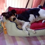 Herausnehmbares Premium Hundebett in Weiß und Rot