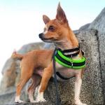 Einstellbar Geschirr für kleine Hunde - Grün Fluo