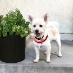 Einstellbar Geschirr für kleine Hunde - Orange Fluo